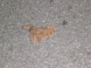 Der mutige Frosch